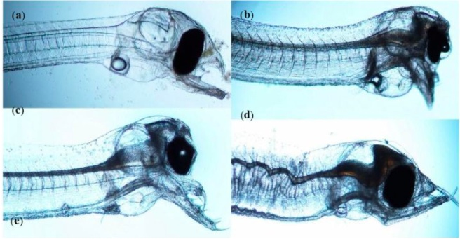 6 個鰻魚冷知識,被吃到滅絕是有原因的 - 壹讀