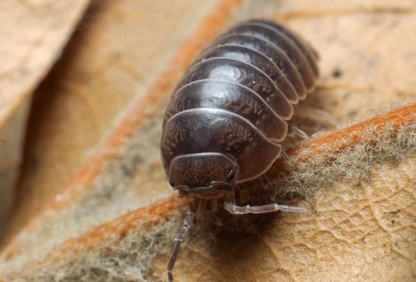 農村常見的11種昆蟲。你認識幾種? - 壹讀