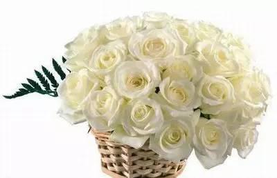 最全花語!118種花。118種愛的含義。你都知道嗎? - 壹讀