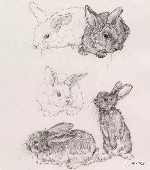 圖文教程:寫意兔技法解析 - 壹讀