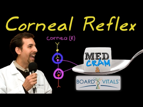 Corneal Reflex Explained Clearly by MedCram.com - A BoardVitals Question