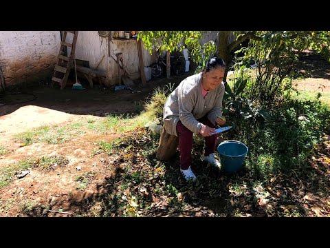 Nopalitos con Mollejas y Chile De Mi Rancho A Tu Cocina