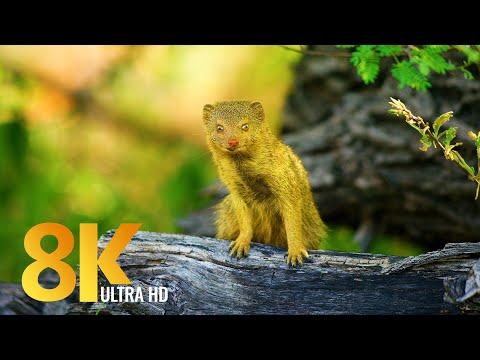 Amazing Wild Botswana - Nature and Wildlife in 8K - Film Trailer
