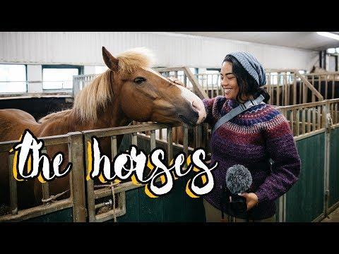 Iceland Pilgrimage -  The Horses