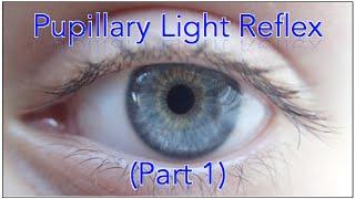 Pupillary light reflex pathway - (Plus Sample Questions)