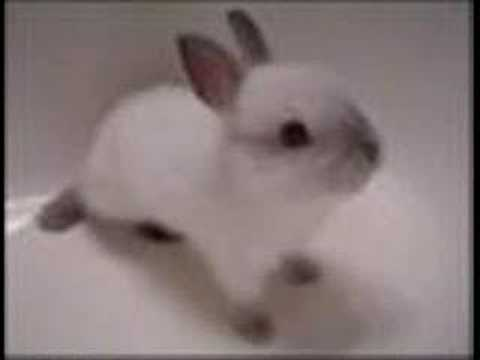 Description: Cute videos of Rabbits and Bunnies