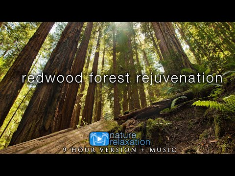 9 HOURS of Redwood Forest Rejuvenation in 4K + 528HZ Music for Inner Peace, Stress Relief & Sleep 💚
