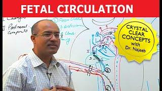 Fetal Circulation - Detailed Explanation
