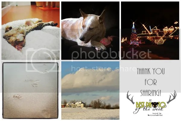 My Best Photo of the Week submissions week 15