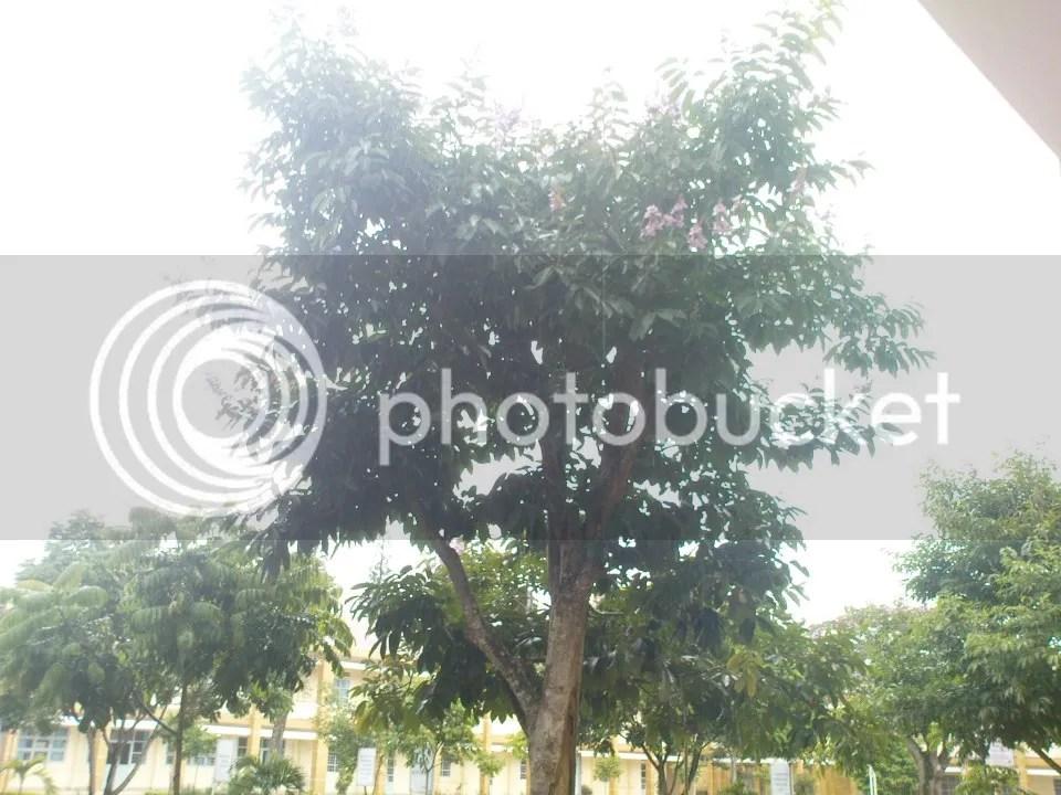 photo 942437_583437211688713_825994760_n_zps893e1edf.jpg