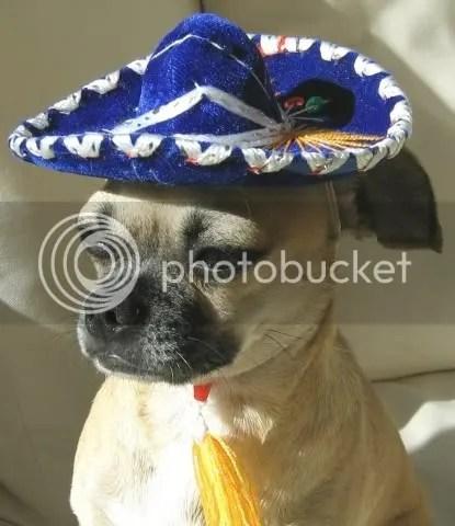 MexiDog