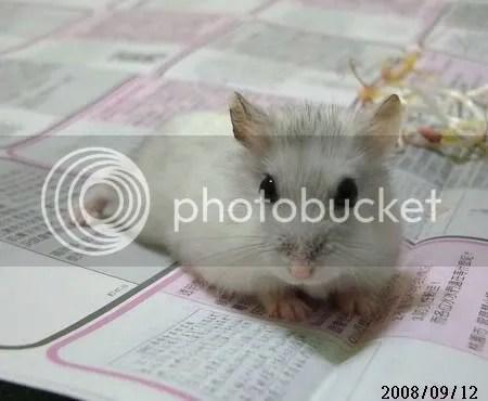 Cynthia的部落格: 銀狐鼠