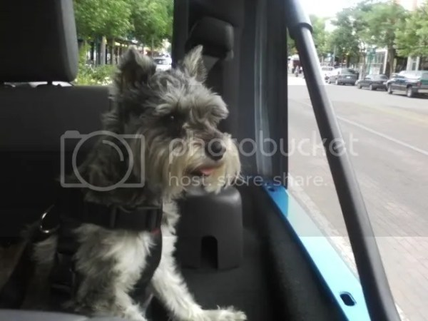 Dog harness for the Jeep