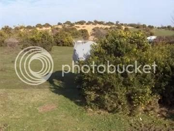 new forest england hampshire pony england uk
