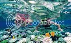 photo Paket snorkeling di lombok_1.jpg