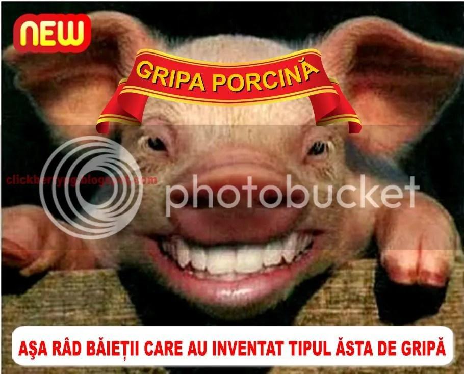 gripa_porcina.jpg porcina image by clickberty