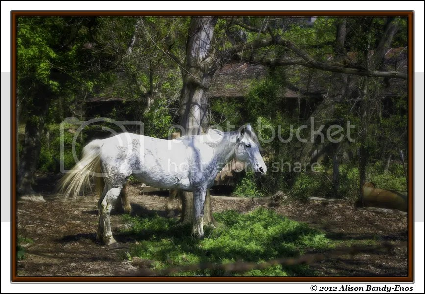 Tennesee Horse - Final Image