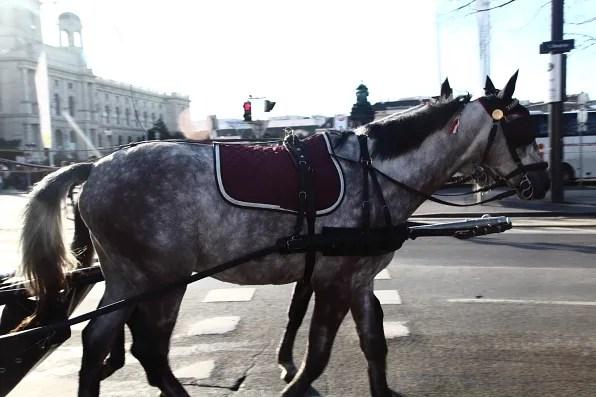 A horse in Vienna
