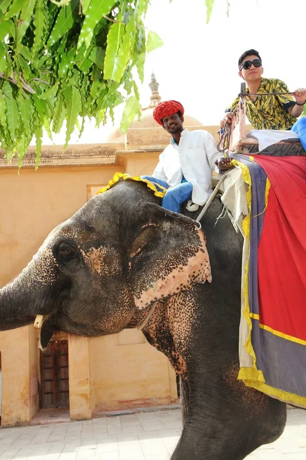 Amber Palace elephant ride