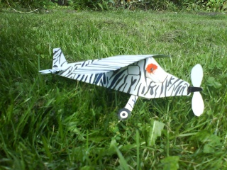 Zebraflieger