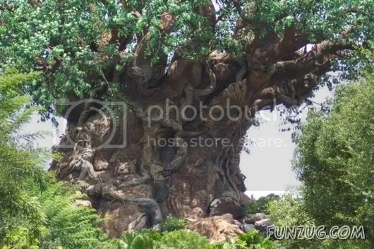 Mysterious Tree in Nalgonda