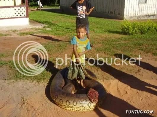 Longest Anaconda Found in Sri Lanka