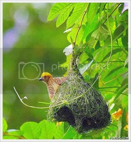 The Art of Making Bird Nests