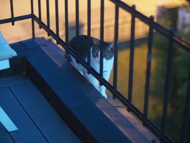 photo 2016-07-24 Freddy paring balkongen 1_zpswklpwibe.jpg