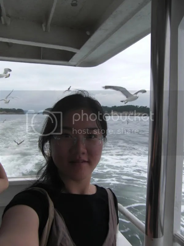 ...And the seagulls are rushing to get a bite of the prawn sticks. Not the passengers fingers I hope...