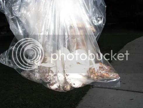 Bag 'O Mushrooms