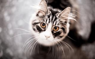 Image result for apprentice cat