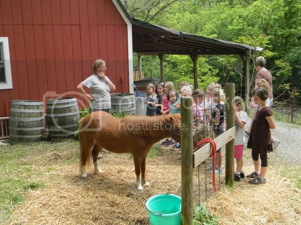 josie s birthday party at sunrock farm lebeau s le blog after the girls spent some time the goats they got to groom a pony
