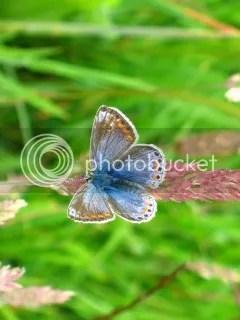Butterfly on Skye