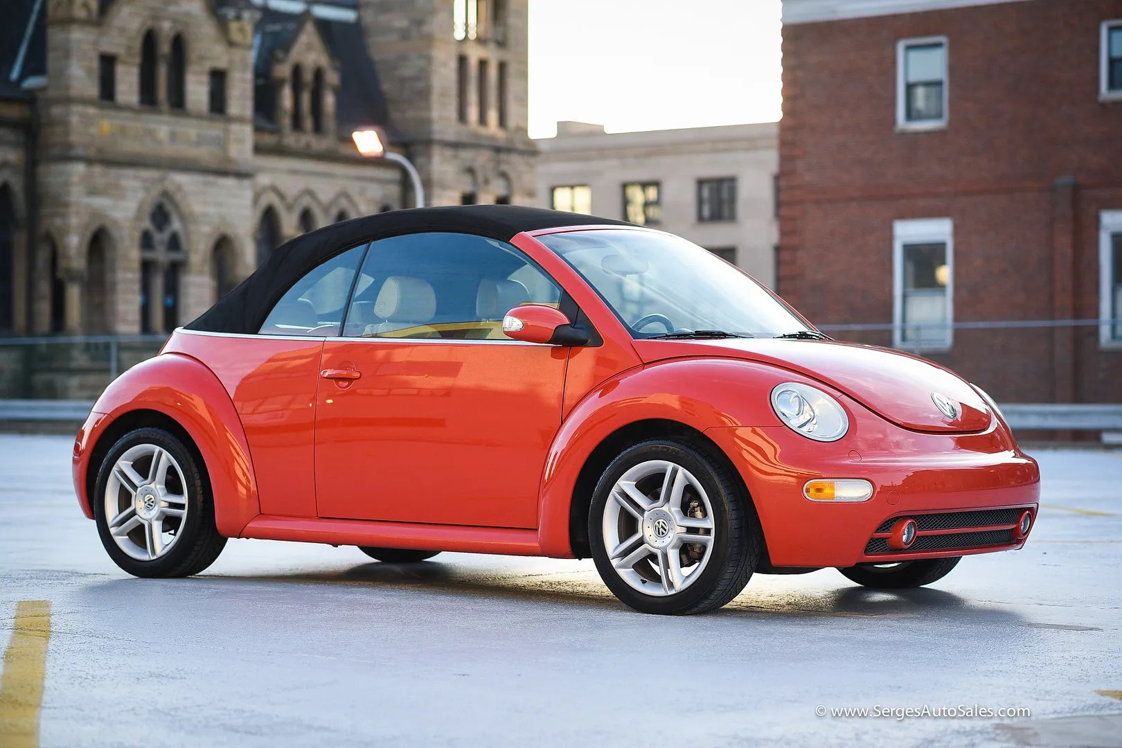 photo beetle-10_zpsmxm2hkqu.jpg