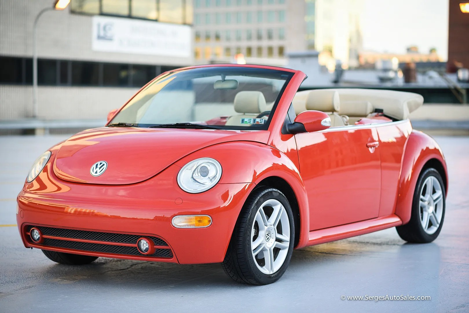 photo beetle-24_zpsbm6kjjb1.jpg