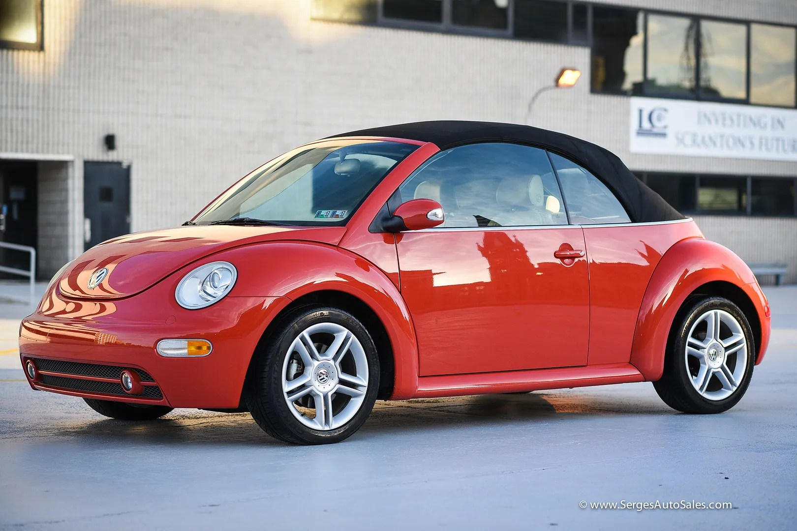 photo beetle-3_zpshfaoupcy.jpg