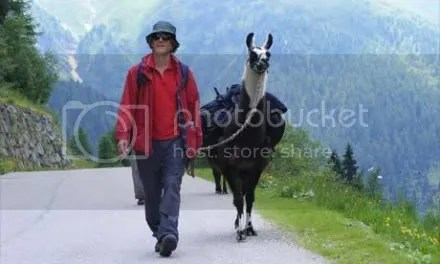with the llamas in the Tyrol