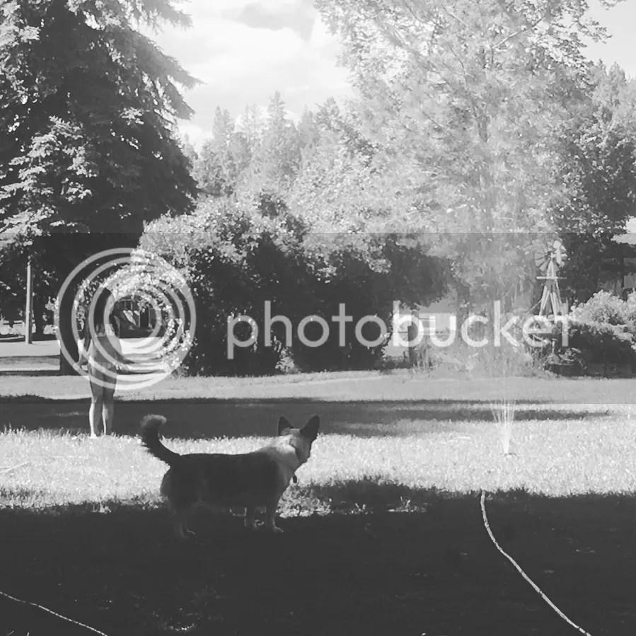 photo 2017-06-23_16-25-37_316_zpswmihyatp.jpeg