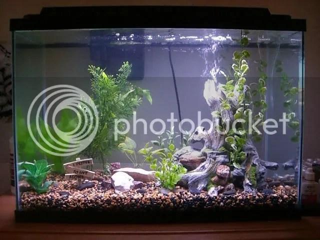aquarium forum