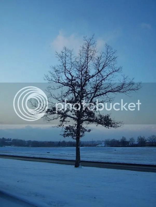 photo 100_9781_zpsa5185e3d.jpg