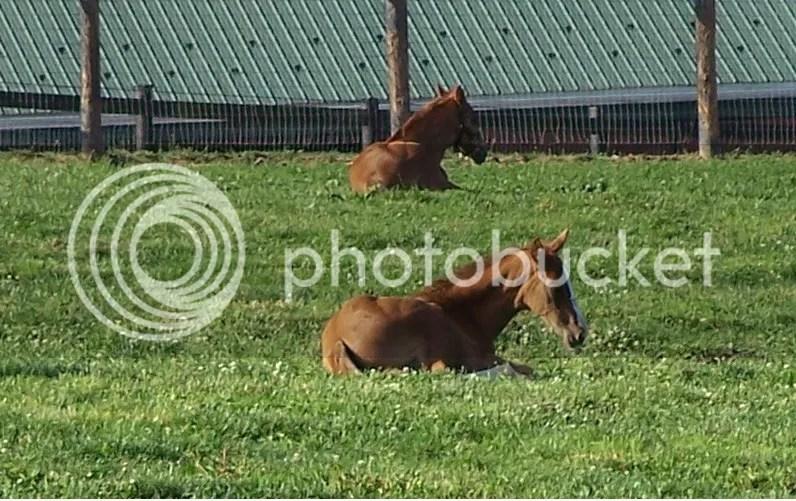 photo foals_zps874b92b2.jpg