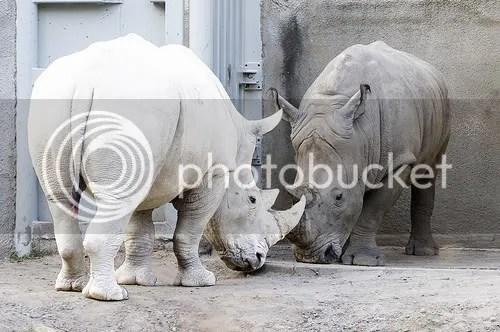 2482437244 ee2a6fa5dc Albinismo: O branco que a natureza merece