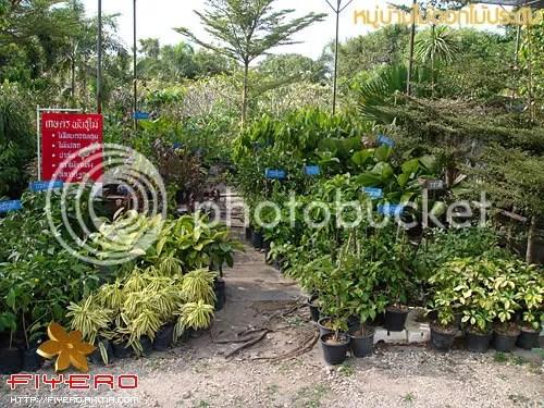 ตลาดต้นไม้, ดงบัง, ปราจีนบุรี, เมืองไม้ดอกไม้ประดับเฉลิมพระเกียรติฯ, ดอกไม้