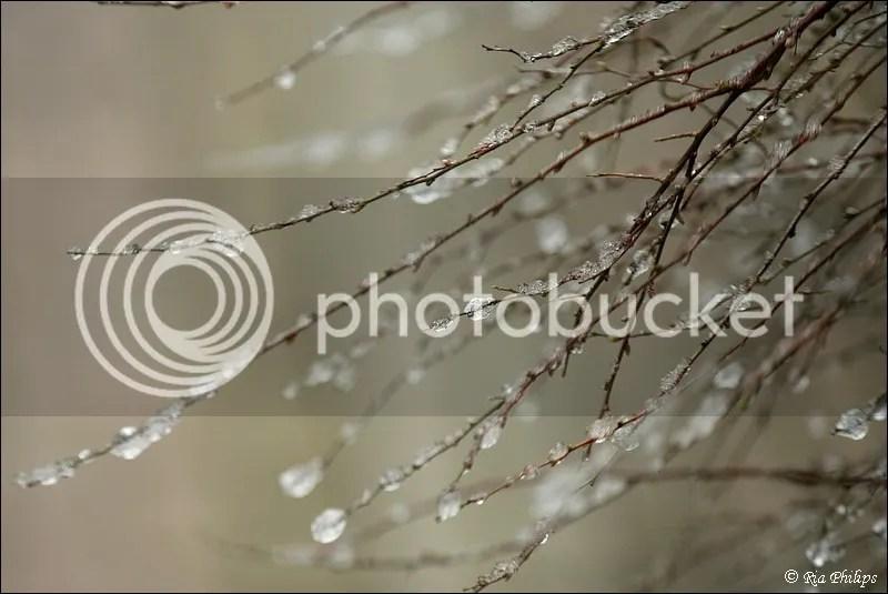 photo IMG_6205_zps23f60474.jpg