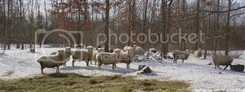Sheep may safely graze? Manna Storehouse photo