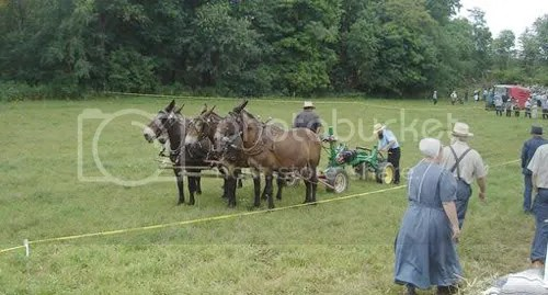Horse-drawn tillage? Photo Wayne Herrod