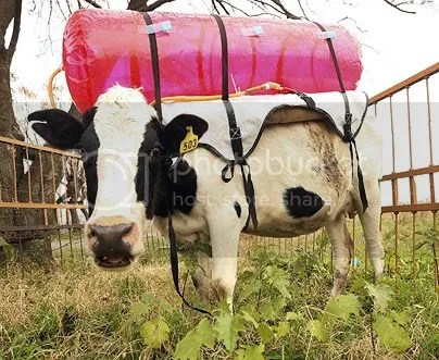 FDA plans to tax cow emissions have proved to be just a trial balloon