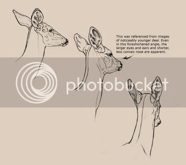 diagram of whitetail deer skull wiring for alternator warning light head diagram, deer, free engine image user manual download