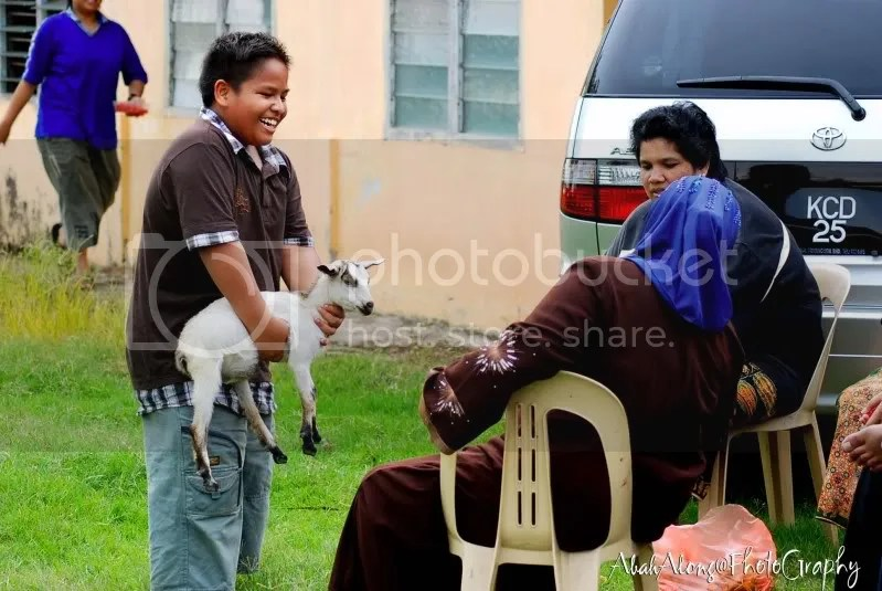 kambing Pictures, Images and Photos