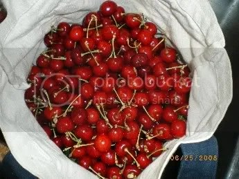 11 lbs of cherries